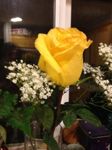 Consolation Rose