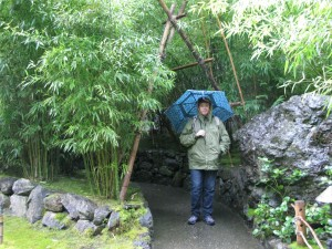 Bamboo in the Rain