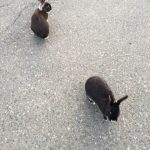 Qualicum Bunnies
